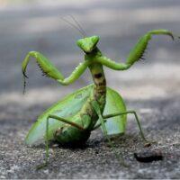 Самые опасные насекомые