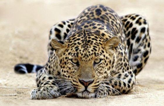 Самые редкие и исчезающие виды животных