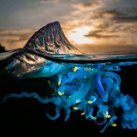Самые опасные медузы