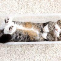 Самые популярные коты