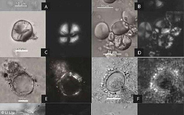 Фитолиты, обнаруженные в пещере Ракефет, под микроскопом