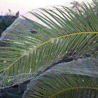 Нашествие пауков в греческом городе Айтолико