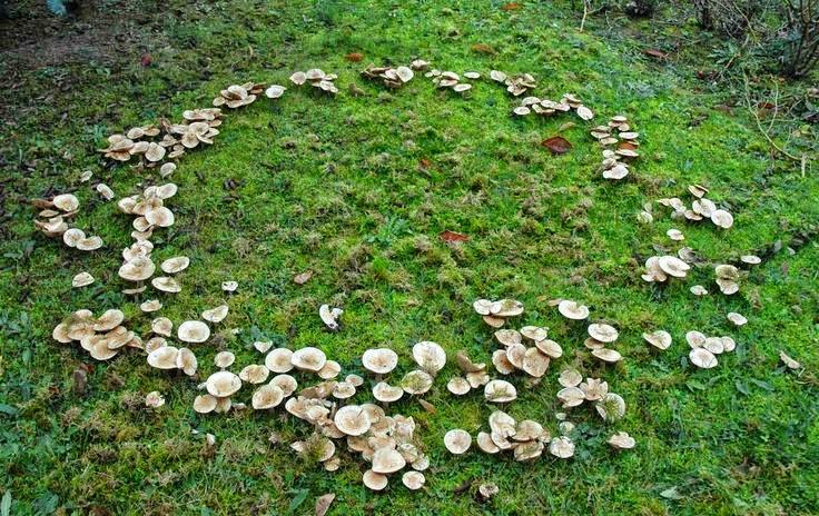 Ведьмин круг - нечисть или грибы?