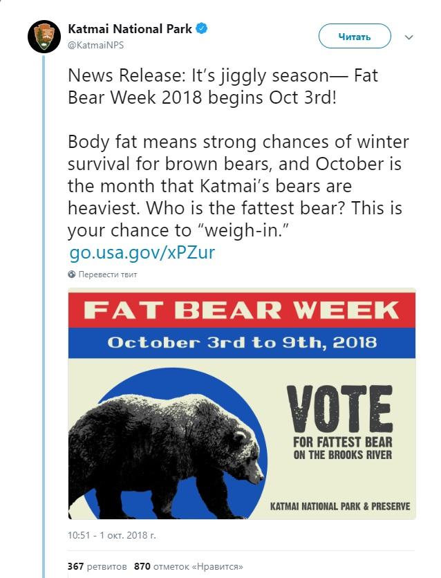 """Анонс """"Недели жирного медведя"""" в твиттере парка Катмай"""