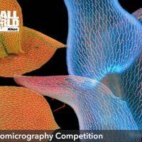 Nikon огласили победителей конкурса микроскопического фото