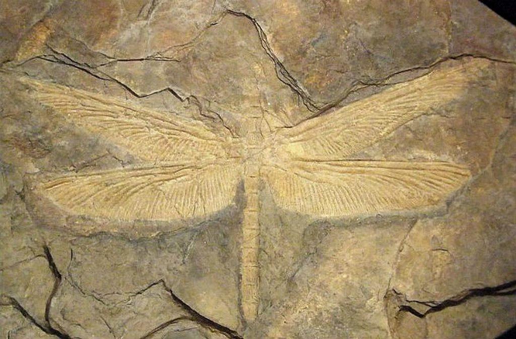 Meganisoptera