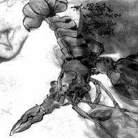 Природный гидрогель в мембране североатлантического омара: эластичная и прочная броня