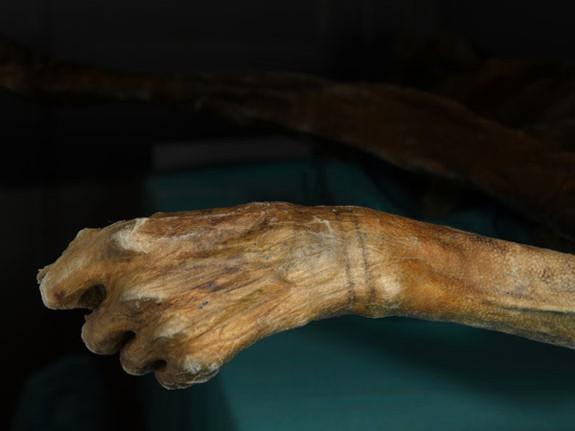 Рука мумии Эци