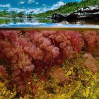 Каньо-Кристалес – река пяти цветов