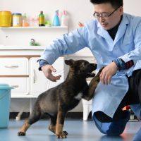 Куньсюнь — первая полицейская собака-клон в Китае