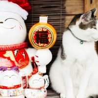 Хоутонг — кошачья деревня в Тайване