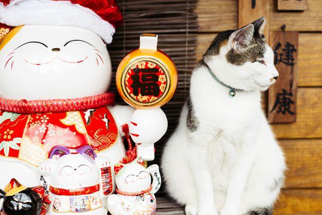 Хоутонг - кошачья деревня в Тайване