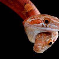 Cold Instinct: невероятные фото рептилий и амфибий