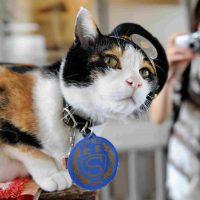 Тама — первая кошка-станционный смотритель