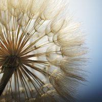 Популярные мифы о сенной лихорадке