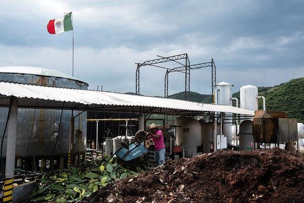 Биотопливо из кактуса от компании Nopalimex