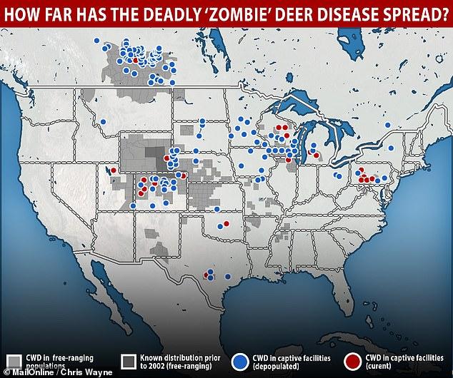Олени-зомби: Северную Америку захватила опасная болезнь