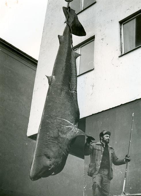 Самые крупные рыбы, пойманные человеком (часть 2)