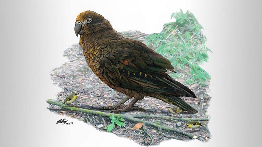 Крылатый Геракл: самый большой попугай в мире