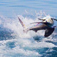 Самые крупные рыбы, пойманные человеком (часть 1)