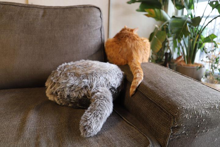 Qoobo: терапевтический робот с кошачьим хвостом