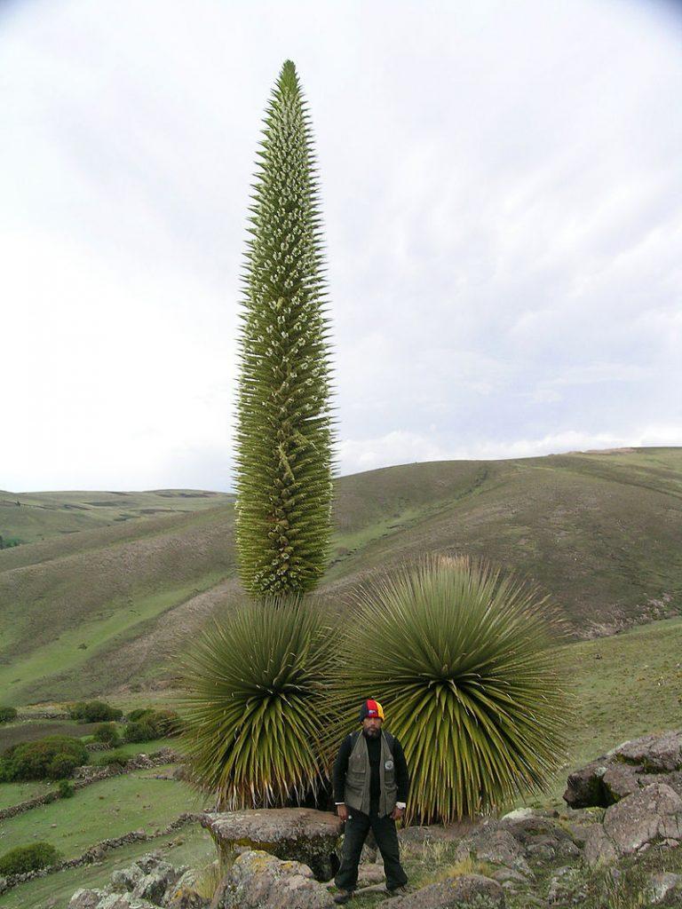 Самые крупные цветки в мире