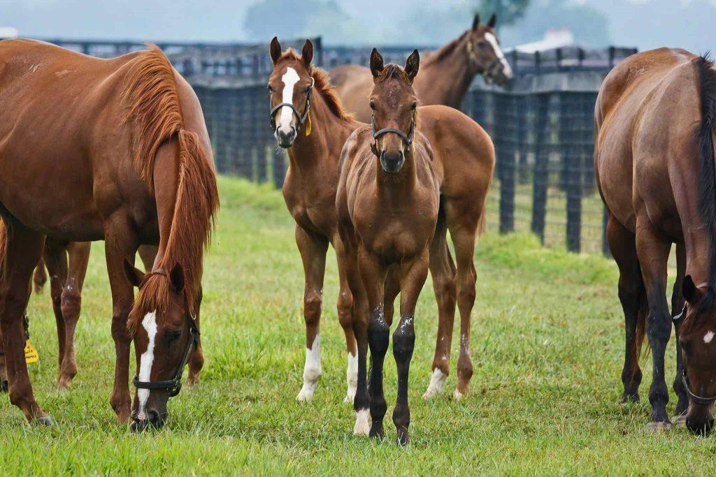 Сколько стоит чистокровная верховая лошадь?