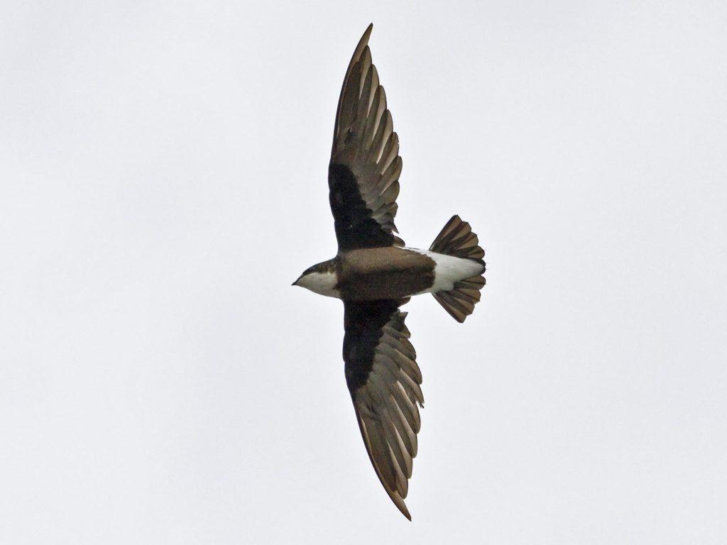 Самые быстрые птицы нашей планеты