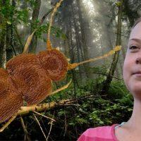 Nelloptodes gretae: в честь экоактивистки Греты Тунберг назвали жука