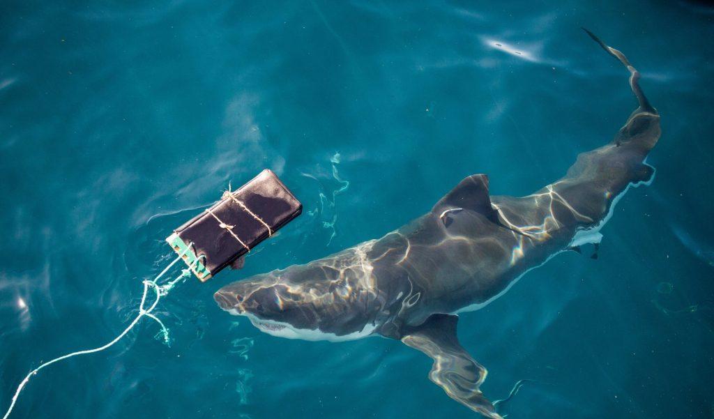 Австралийские учёные создали «акулонепроницаемый» материал для гидрокостюмов