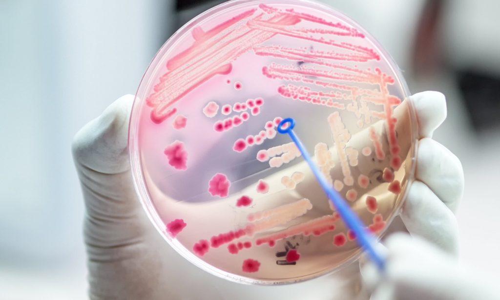 Бактерию Escherichia coli научили питаться углекислым газом