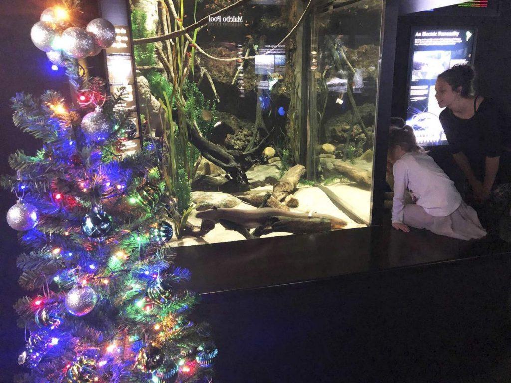 Электрический угорь Мигель Ваттсон зажигает рождественские гирлянды