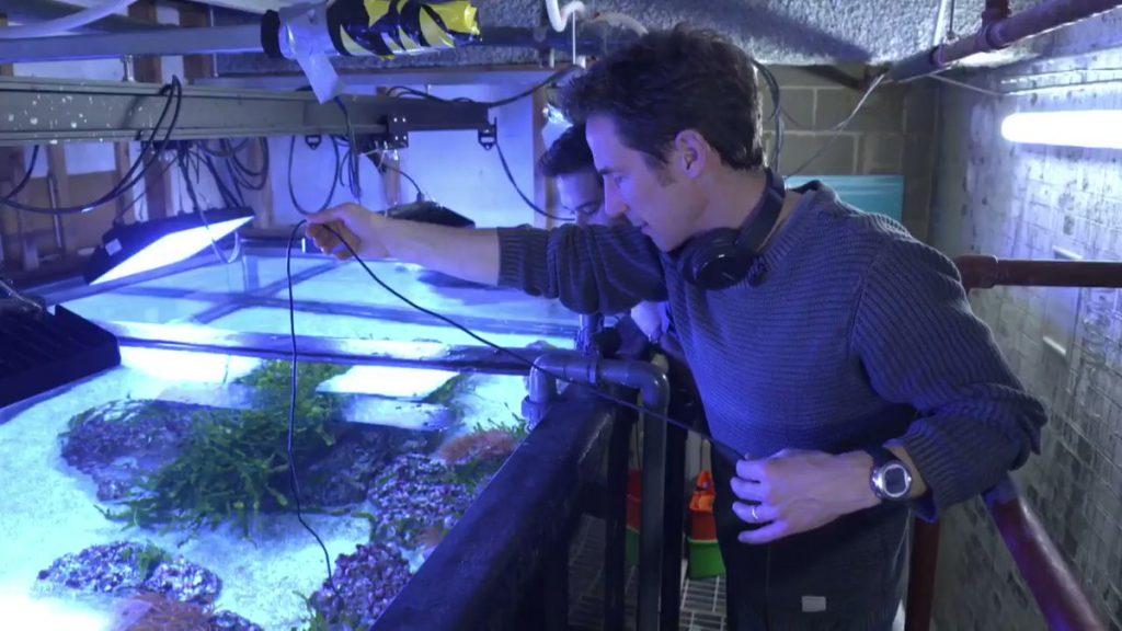 «Нем как рыба?»: учёные впервые записали голоса рыб