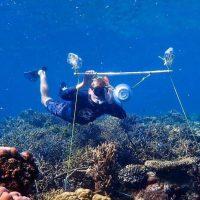 Большой Барьерный риф можно оживить при помощи звука