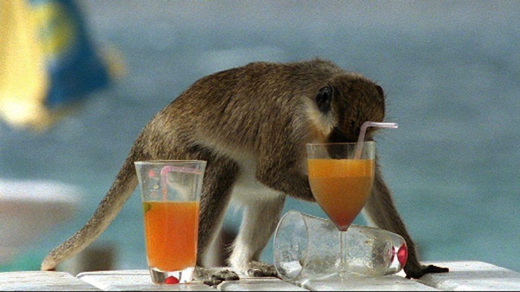 Пьяные свиристели: алкоголь в животном мире