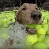 Какого цвета теннисный мяч?  ?