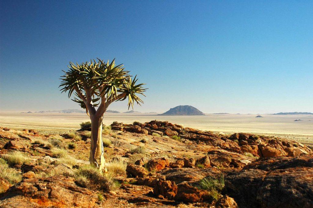 Суккулентное Кару – уникальная цветущая пустыня