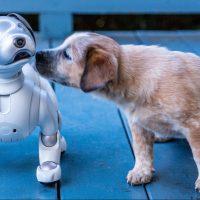 Aibo Land: кафе для собак-роботов ?