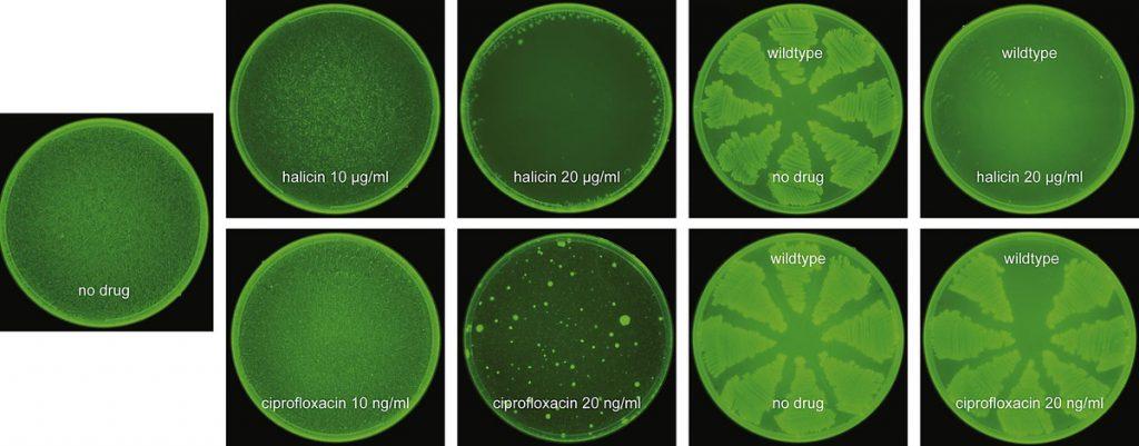 Halicin – мощный антибиотик, созданный искусственным интеллектом