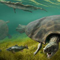 Stupendemys geographicus: древние черепахи размером с автомобиль