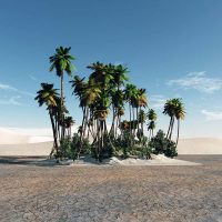Учёные прорастили финиковые пальмы из 2000-летних семян