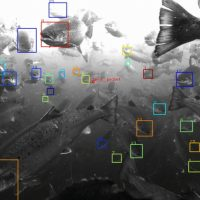 Tidal: система распознавания лиц для рыб