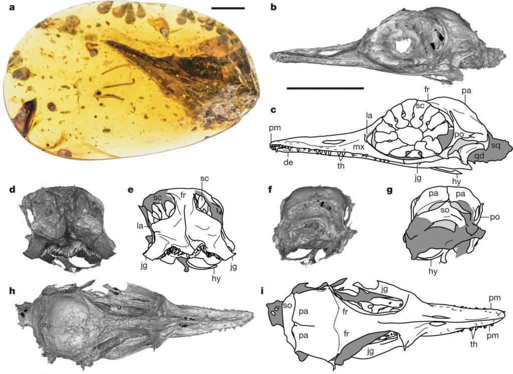 Oculudentavis khaungraae – самый маленький динозавр