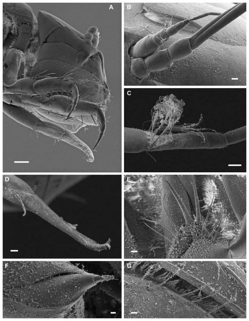 Macrostylis metallicola: новый вид ракообразных назвали в честь группы Metallica