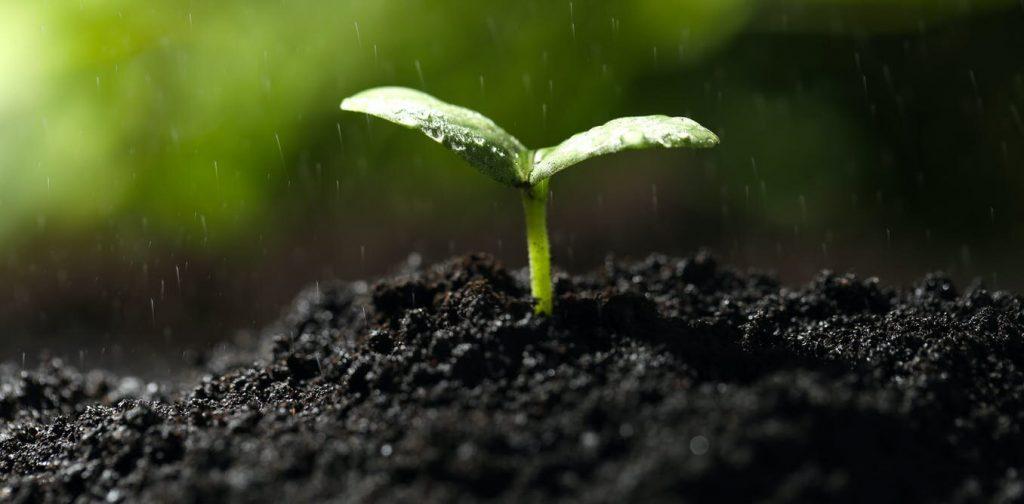 Учёные разгадали природу запаха весны