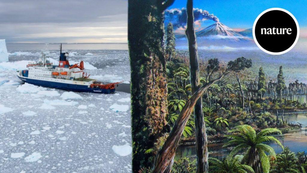 Учёные обнаружили останки дождевых лесов у берегов Западной Антарктиды