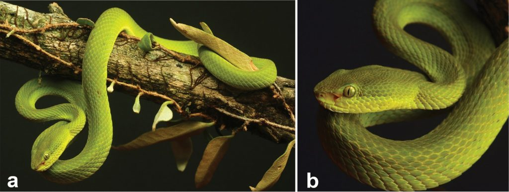 T. salazar: учёные назвали змею в честь Салазара Слизерина