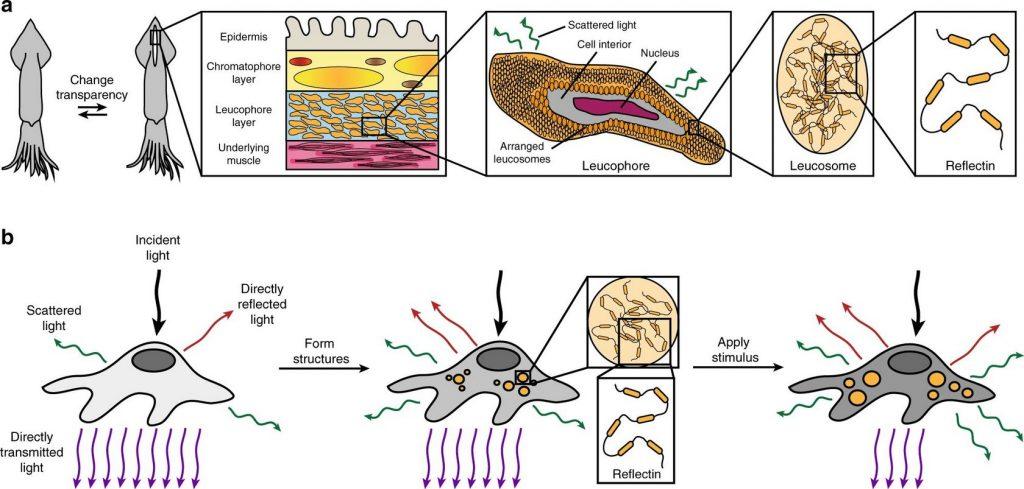 Человек-невидимка: учёные создали невидимые клетки