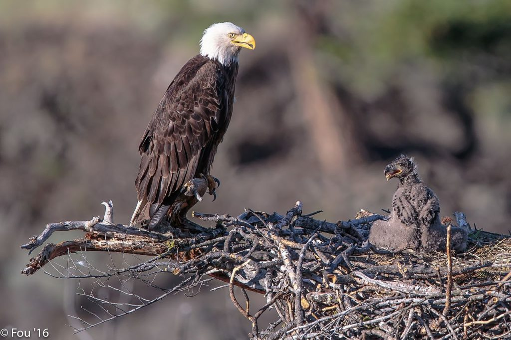 Самое большое птичье гнездо в мире