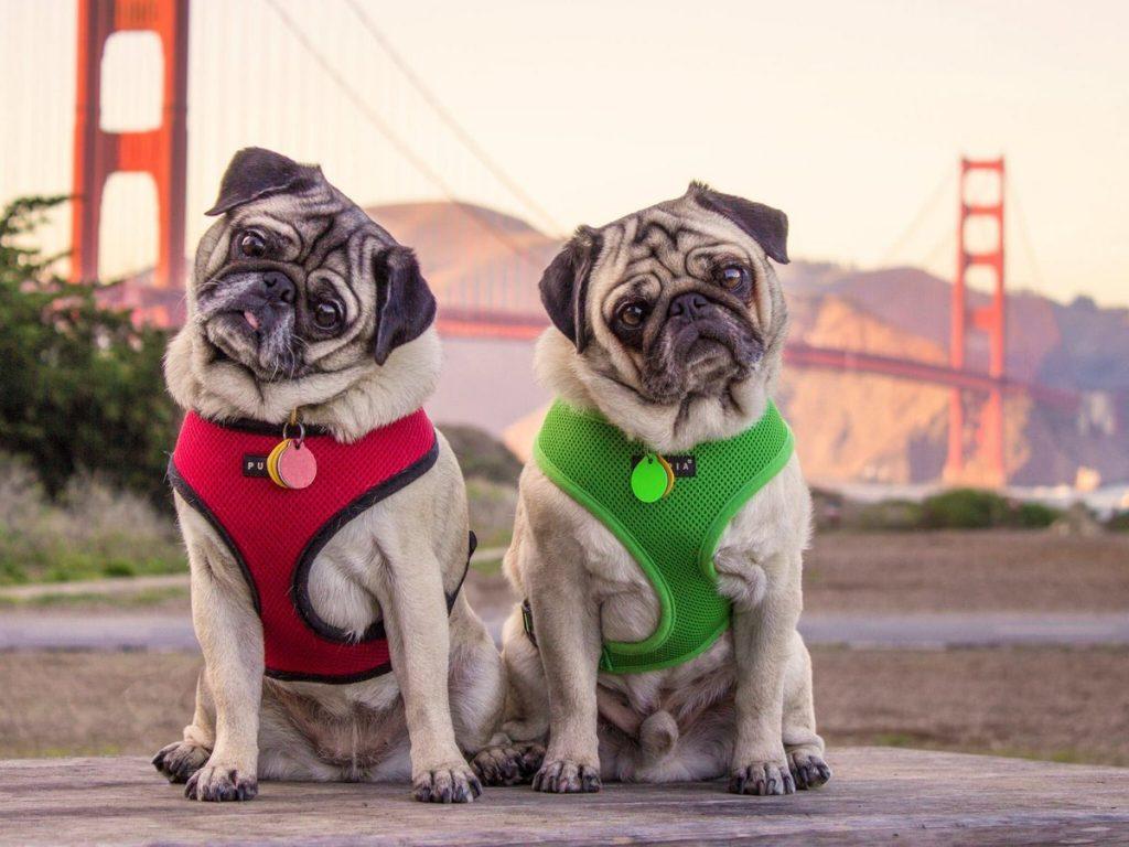 Самые популярные собаки интернета